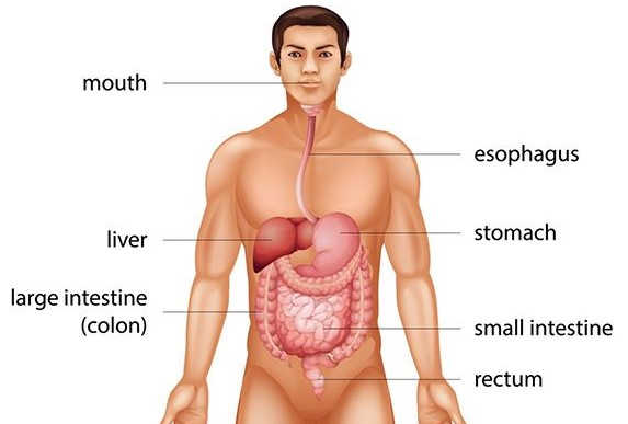 What is Colon Cancer And What Are Colon Cancer Symptoms